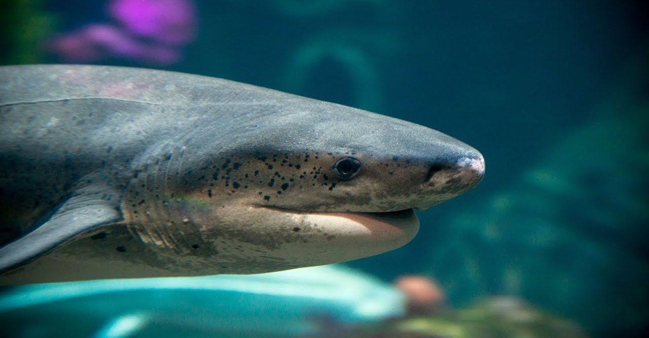 Confinement : l'aquarium de Monterey met ses bassins en livestream sur YouTube