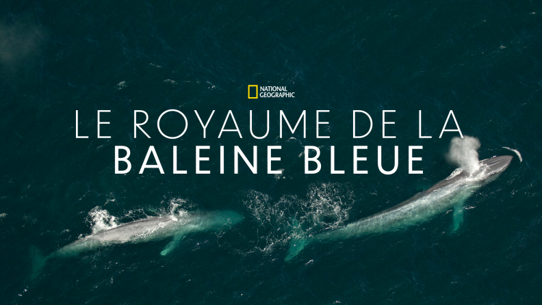 Disney Plus : Le royaume de la baleine bleue par le National Geographic